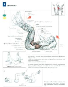 1000+ images about ANATOMICAL WORKOUT CHART on Pinterest