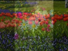 Tchaikovsky- Vals de las flores