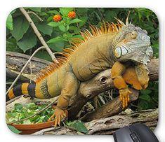 イグアナのマウスパッド:フォトパッド(世界の爬虫類シリーズ) (B)