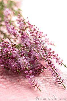 The 98 best heather flower images on pinterest heather flower bouquet of heather flowers candle making supplies heather hills heather flower candle making mightylinksfo