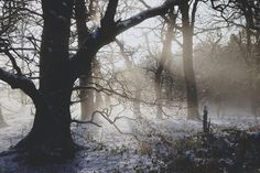 nature, winter, and tree εικόνα Fantasy Inspiration, Nymph, Wonderful Time, The Great Outdoors, Wilderness, Mists, Find Image, Scenery, World