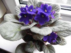 fokföldi_takács Ildikó Hanukkah, Wreaths, Plants, Gardening, Home Decor, Needlepoint, Violets, Decoration Home, Door Wreaths