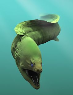 Moray eel so cool. I'm so glad I don't live in the ocean if this thing is something I could accidentally happen upon