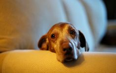 10 Signs Of Canine Cancer Every Dog Owner Needs To Know About