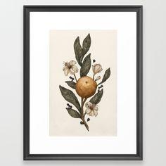 Clementine Framed Art Print
