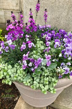 Purple and White Container Garden for Easter - The plants in this purple and white themed container garden include wallflower, pansies, dusty miller, and lamium - My Gardening Today Container Flowers, Container Plants, Succulent Containers, Garden Planters, Herb Garden, Flower Planters, Potted Plants Patio, Pot Plants, Fall Planters