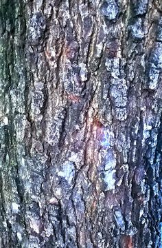 Texturas_Brushes_pngs: TREE BARK - CASCA DE ÁRVORE