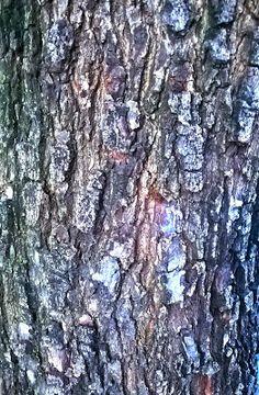 Texturas_Brushes_pngs: TREE BARK - CASCA DE ÁRVORE
