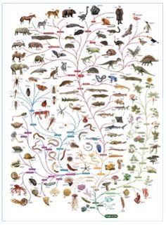 nature ecosystem
