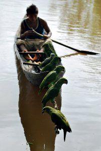 The Orinoco Delta.... Mi bella y amada Venezuela