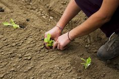 Gardeners Help Fight Hunger by Growing a Row for Charity | TakePart