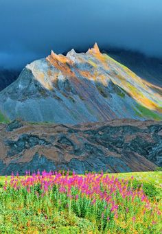 Rosebay Willowherb and mountains in Kamchatka, Russia.