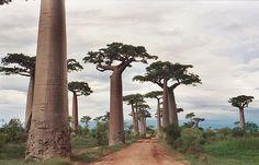 Madagastar