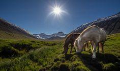 Icelandic Horses by Bernhardur Gudmundsson on 500px