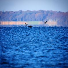 Aborg Strand #visitfyn #fyn #nature #visitdenmark #naturelovers #nofilter #natur #denmark #danmark #dänemark #landscape #assens #mitassens #vildmedfyn #fynerfin #assensnatur #vielskernaturen #visitassens #forrest #instapic #picoftheday #sea #winter #birds