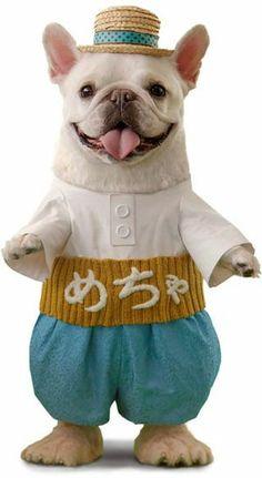 めちゃコミック CMの犬が可愛いと話題で画像まとめ【めちゃ犬・フレンチブルドッグ】 - NAVER まとめ