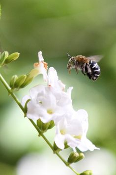 """""""Bee~lieve"""" ♥ Follow the rhythm of your own heartbeat. Listen to your true self, your higher self. Heed your inner voice and wisdom."""