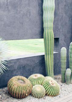 Urban Jungle Bloggers | A 'plant colour pop' | These Four Walls blog