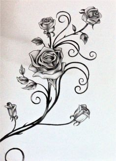 Drawings of Vines and Leaves | Roses and The Vine by rosilutfi