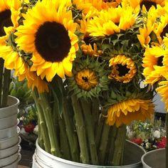 Boston farmers market
