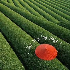 I wish I...  Start living your wishes http://www.rivertea.com/