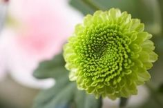 Google Image Result for http://img.ehowcdn.com/article-new/ehow/images/a07/ts/f3/flower-green-bell-shape-800x800.jpg