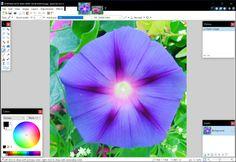 Paint.NET, Paint 3D, Windows 10, Windows 10 Creators Update
