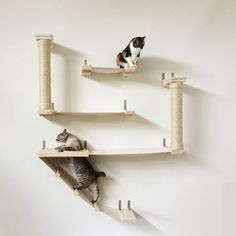 arbre a chat a fixer au mur