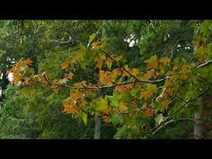Mirror Lake, Norfolk, Botanical Gardens, Reflection, Spirituality, Thoughts, Places, Painting, Painting Art
