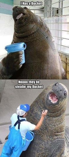 Bucket Meme #Happy, #Proud