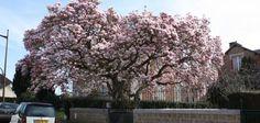Saint-Hilaire-du-Harcouët (50) : Promenons-nous sous les arbres... !!!