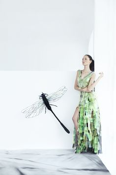 A dazzle of dragonflies painting one dreamy collection