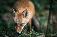 Who are you? Photo by Hidetoshi Kikuchi — National Geographic Your Shot