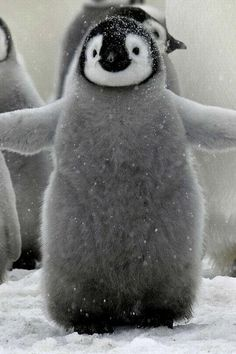 Funny pictures about Free penguin hug. Oh, and cool pics about Free penguin hug. Also, Free penguin hug. Cute Creatures, Beautiful Creatures, Animals Beautiful, Beautiful Things, Beautiful People, Cute Baby Animals, Animals And Pets, Funny Animals, Wild Animals