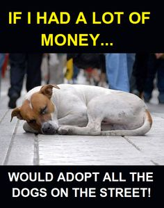 I will adopt & care for ALL those precious fur babies❤⚘❤⚘❤ Puppy Care, Pet Puppy, Dog Cat, Animals And Pets, Baby Animals, Cute Animals, Dog Quotes, Animal Quotes, I Love Dogs