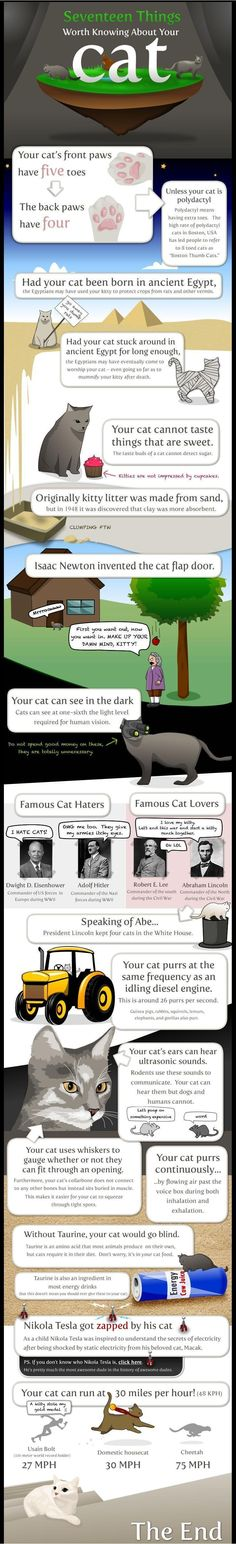 cats by The Oatmeal