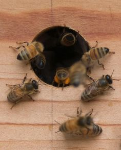 """The Onion House (@theonionhouse) on Instagram: """"#didyouknow Bees cannot fly when the temperature is below 55 degrees. # Which is why beekeepers…"""""""