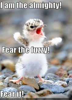 Feel the fear!