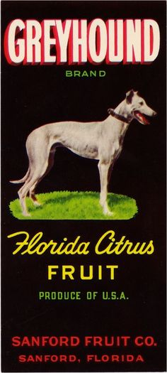 "Who would believe that this speedster of the dog world is commonly called a ""couch potato""? Vintage Labels, Vintage Postcards, Vintage Ads, Orange Crate Labels, Sanford Florida, Florida Oranges, Greyhound Art, Grey Hound Dog, Vintage Florida"