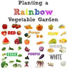 Planting a Rainbow Vegetable Garden