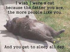 I wish I were a cat...