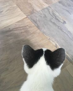 Cute Overload: Internet`s best cute dogs and cute cats are here. Aww pics and adorable animals. Cute Cats And Kittens, I Love Cats, Crazy Cats, Cool Cats, Beautiful Cats, Animals Beautiful, Cute Baby Animals, Funny Animals, Photo Chat