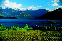 New Zealand wine region...can't wait to go back!