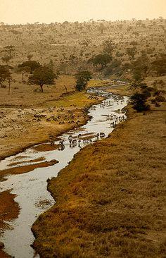 Río Tarangire en la estación seca, P.N. Tarangire -   Tarangire River in the dry season, N.P. Tarangire (August 2005)    www.vicentemendez.com