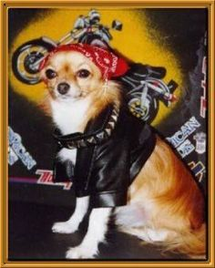 Motorcycle chic chi