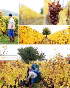 Vins d'Alsace Kelhetter - Dahlenheim - Alsace wine