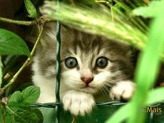 Adorable.... #Relax more with healing sounds: