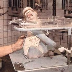 Animal testing for products. That face.