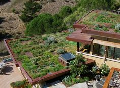 Living roofs. Beyond Architectural Landscaping to something more wholistic than that, but yet still its own discipline...Working with the natural world to form the places that work for We, the people,  and Nature both.