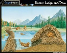 Beaver lodge and Beaver Dam Beaver Lodge, Beaver Dam, Pond Drawing, North American Beaver, Le Castor, Animal Quiz, Carosel Horse, Water Pond, Happy Animals